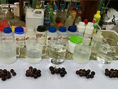 多品种果蔬盐项目团队